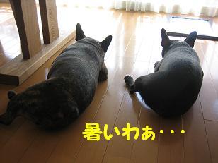 暑いわ・・・2