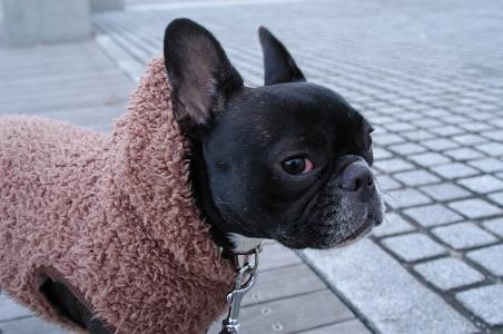 寒いじょ!