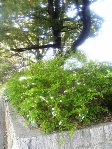 鶴舞公園の緑