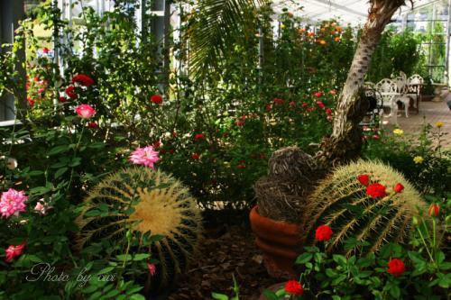 バラ園温室