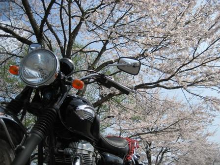 2007_hanami2.jpg