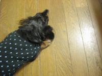 寝てる・・レニー。