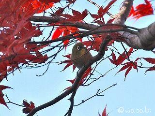 a-bird.jpg