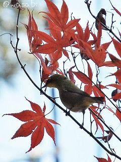 b-bird.jpg