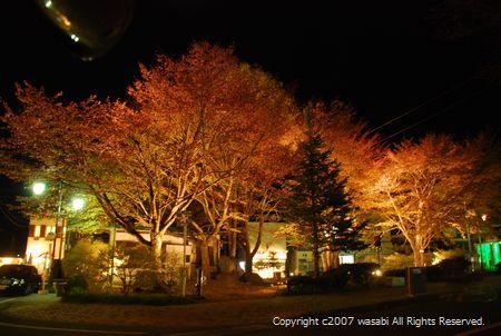 karuizawa-sakura.jpg