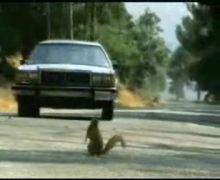 evilsquirrels.jpg