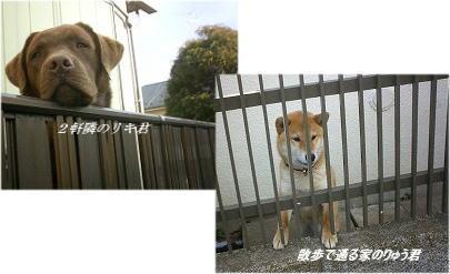 riki-ryu.jpg