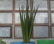 20070525015354.jpg