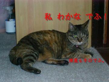 20070528001709.jpg