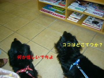 20070604012154.jpg