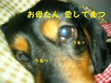 20070624020840.jpg
