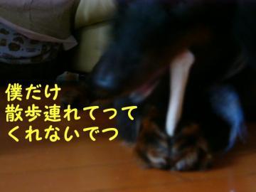 20070825030136.jpg