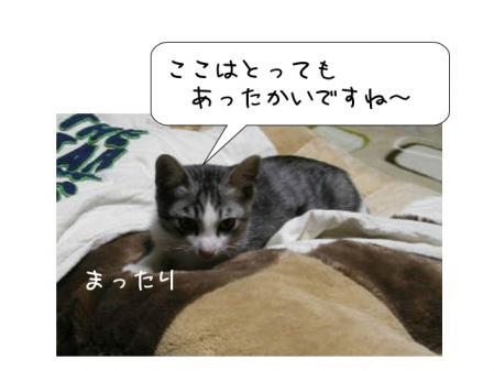 2007111311.jpg