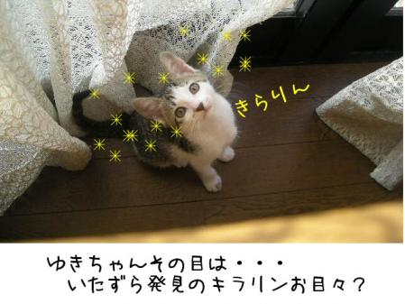 200711411.jpg