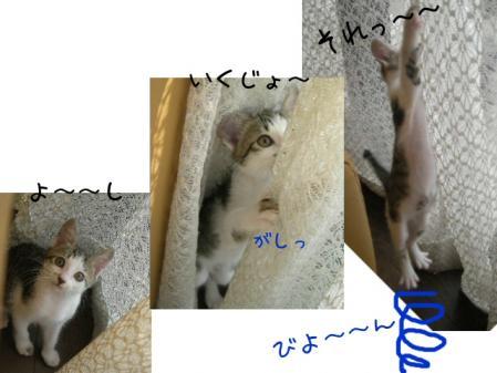200711413.jpg