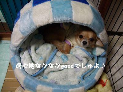20070110225607.jpg