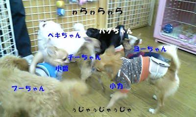 Image214.jpg