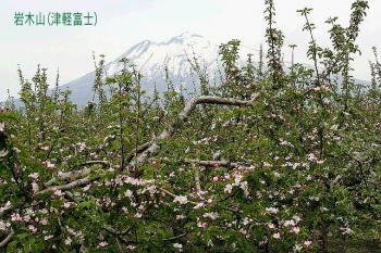 2007.5.17_りんご07