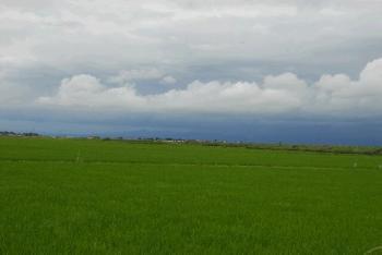 木造町の穀倉地帯