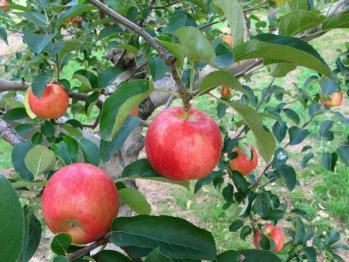 apple200709_007.jpg