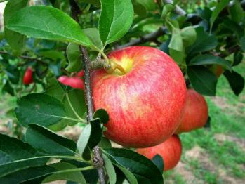 apple200709_009.jpg