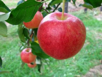 apple200709_011.jpg