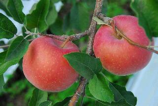 apple200709_017.jpg