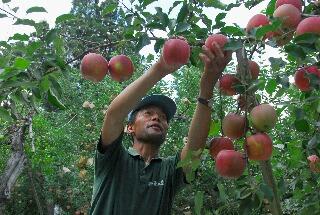 apple200709_019.jpg