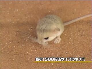 060615_utaban_10.jpg