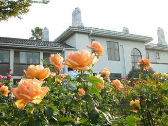 イギリス館前のバラ