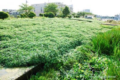 070812_biopark_04.jpg