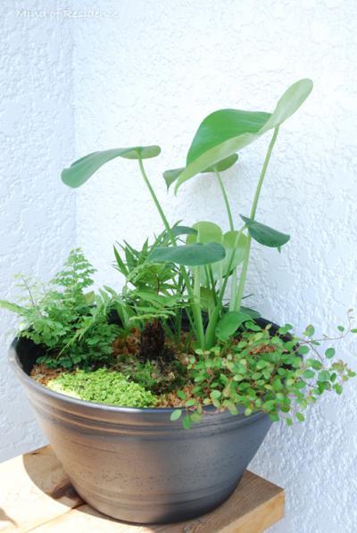 070815_Plants.jpg