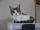 mini-miniIMG_4544-07.11.05.jpg