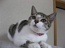 mini-miniIMG_4549-07.11.05.jpg